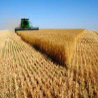 Top 10 Firme din Industria Agricola