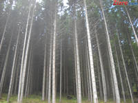 Exportul de busteni, cherestea si lemne de foc, interzis pe o perioada de cinci ani - proiect