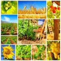 Agricultura romaneasca, un domeniu competitiv in 2014?