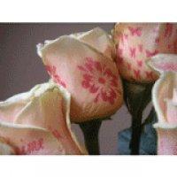 Flori cu petale imprimate